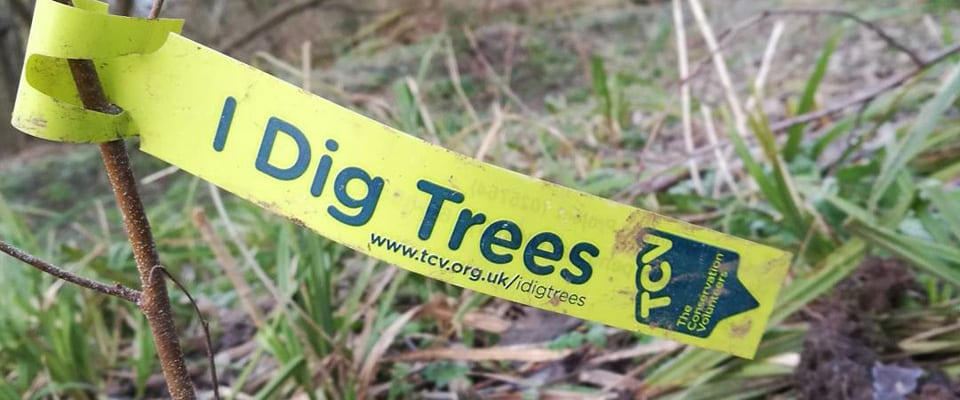 OVO Energy's Tree Planting Initiative Comes to the Tour of Britain